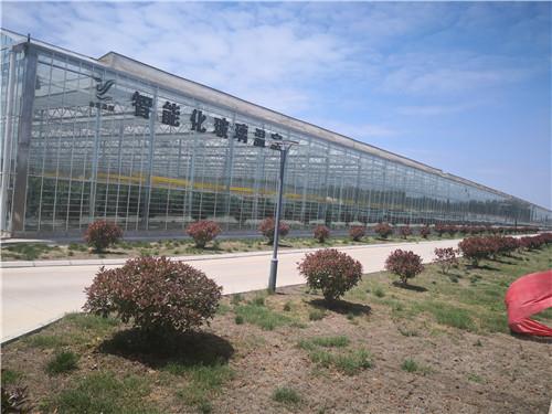 温室玻璃大棚