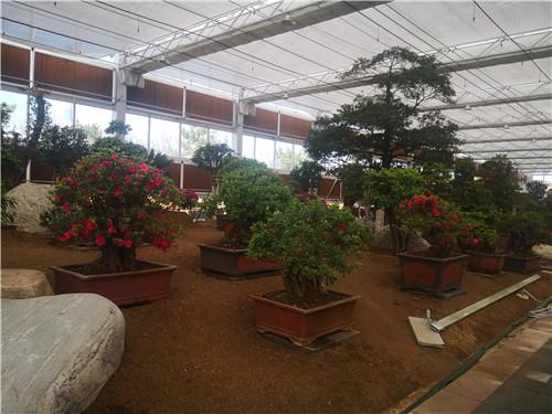 花卉蔬菜大棚